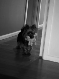 Photo of doggy greyscale