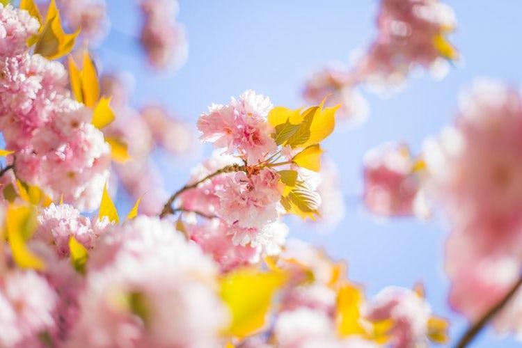 Spring for Apache Kafka — Part 1: Error Handling, Message