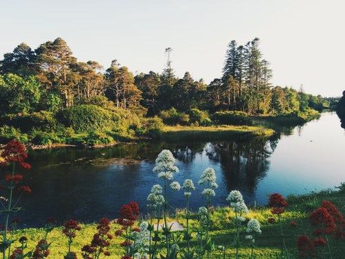 Using Machine Learning to Unlock the Secret of   Plants? - DZone AI