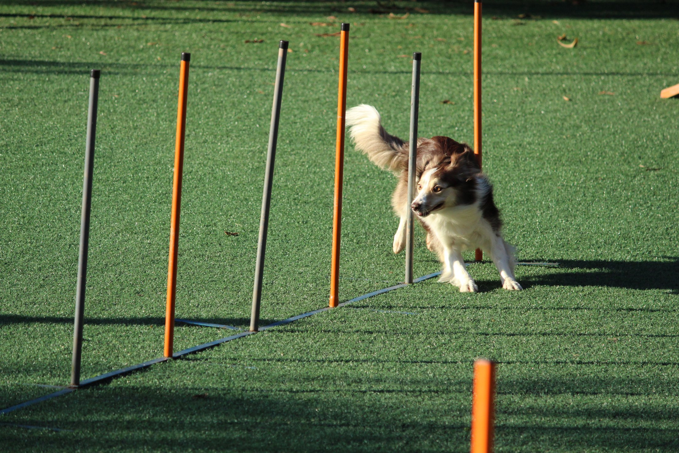 Agility in action