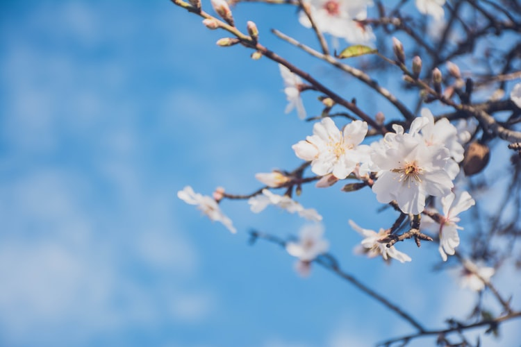 This Week in Spring: Spring Framework 5.2 Release and More - DZone ...