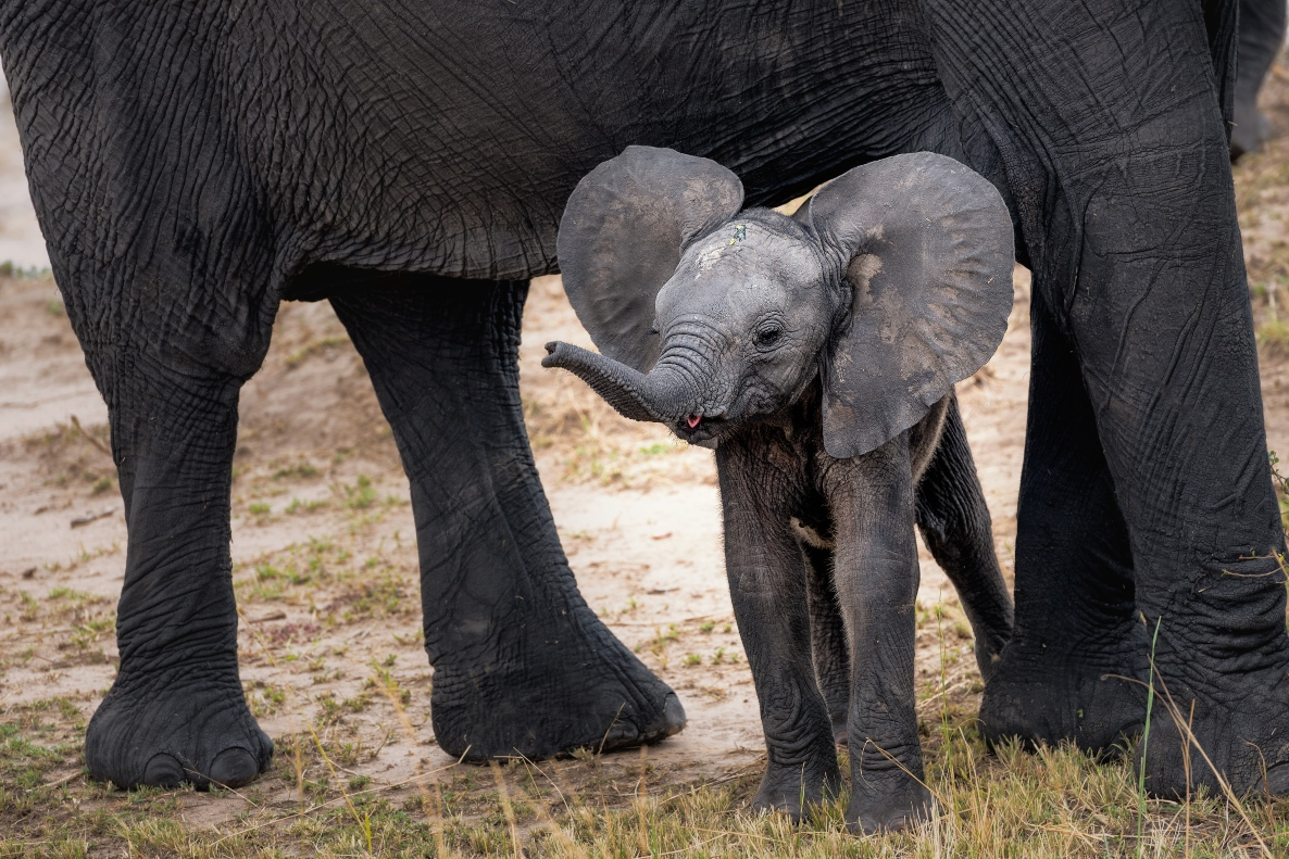 baby-elephant-with-mother