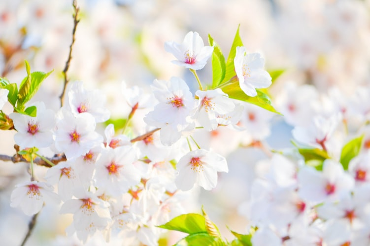 Spring (primavara) 12616412-pic-java-this-week-in-spring