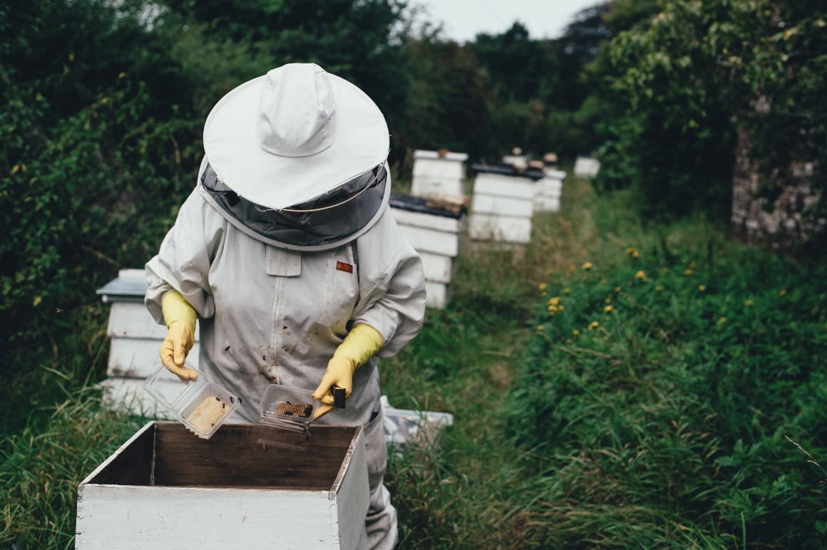 bee-keeper-working-with-bees