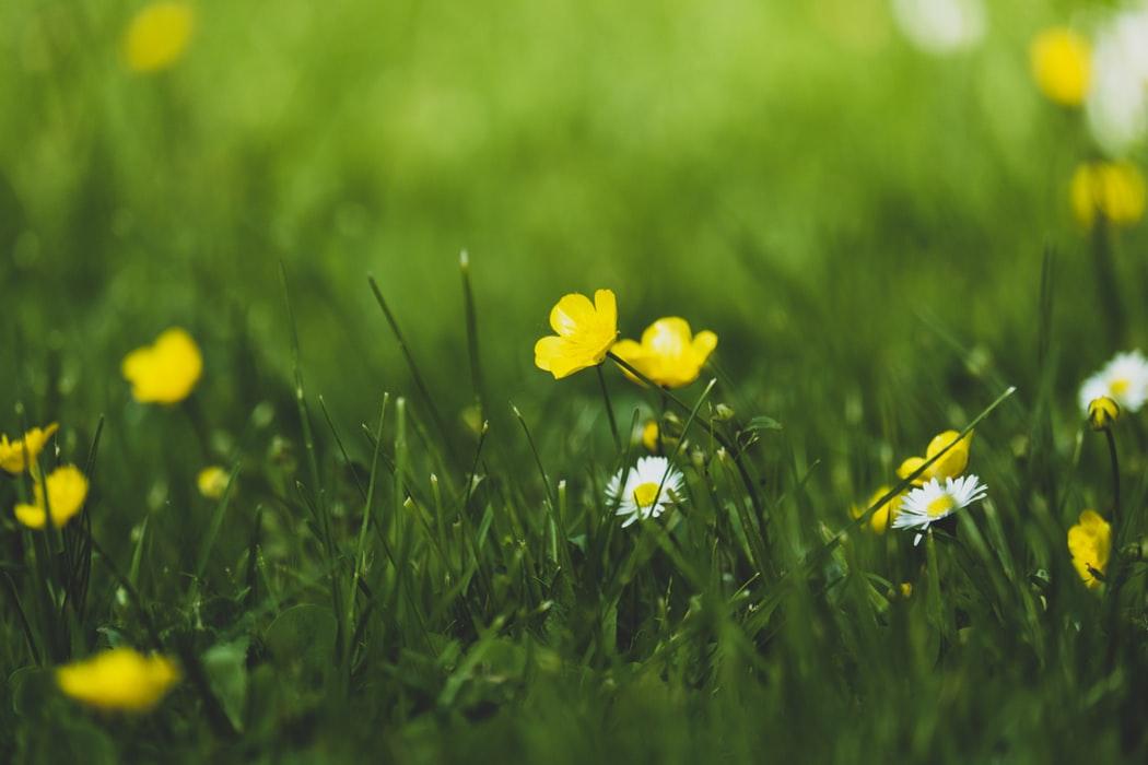 Spring (primavara) 12669723-pic-spring-configuration