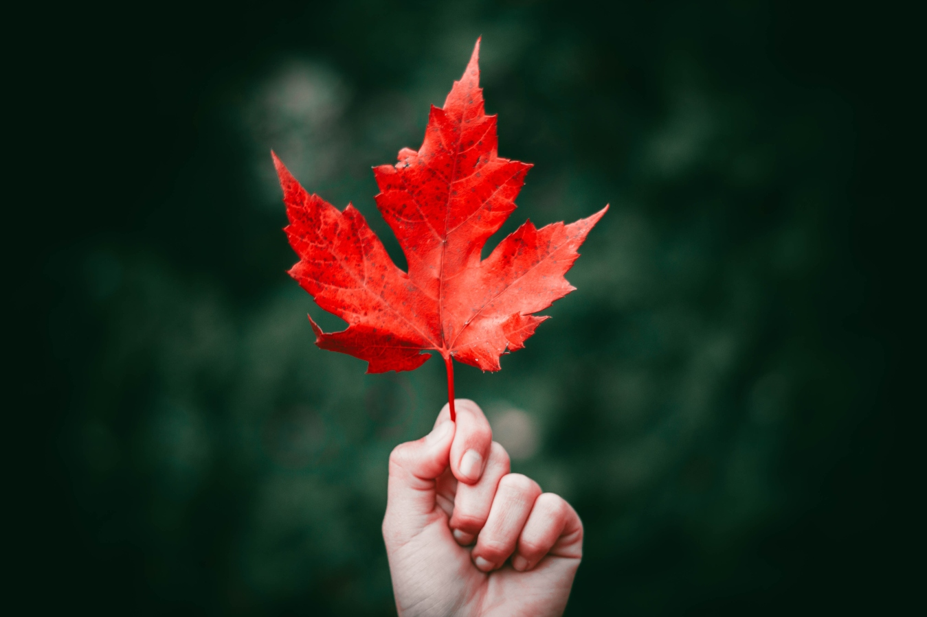 maple-leaf-red