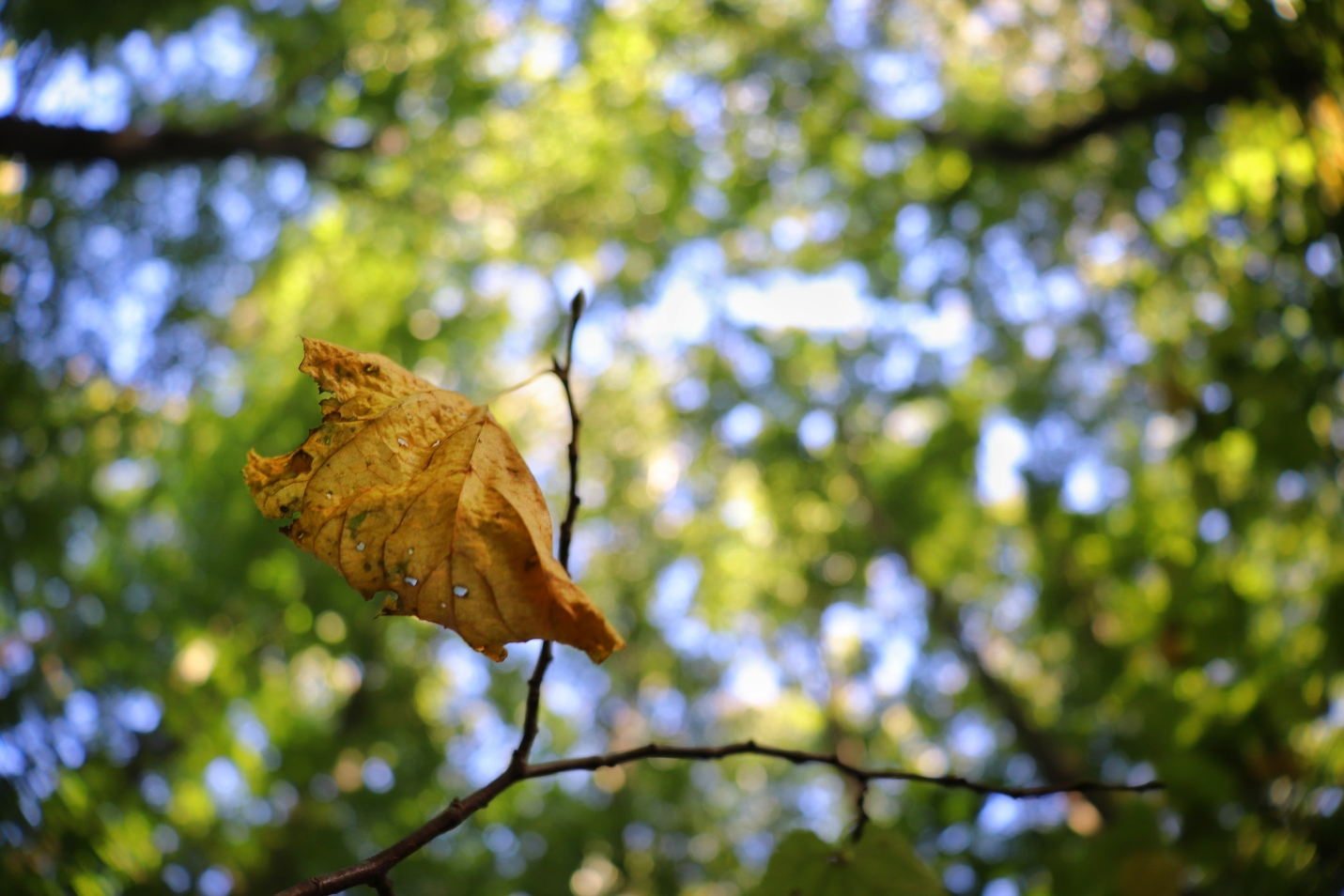 dead-leaf-hanging-twig