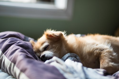 Small dog resting on a bed