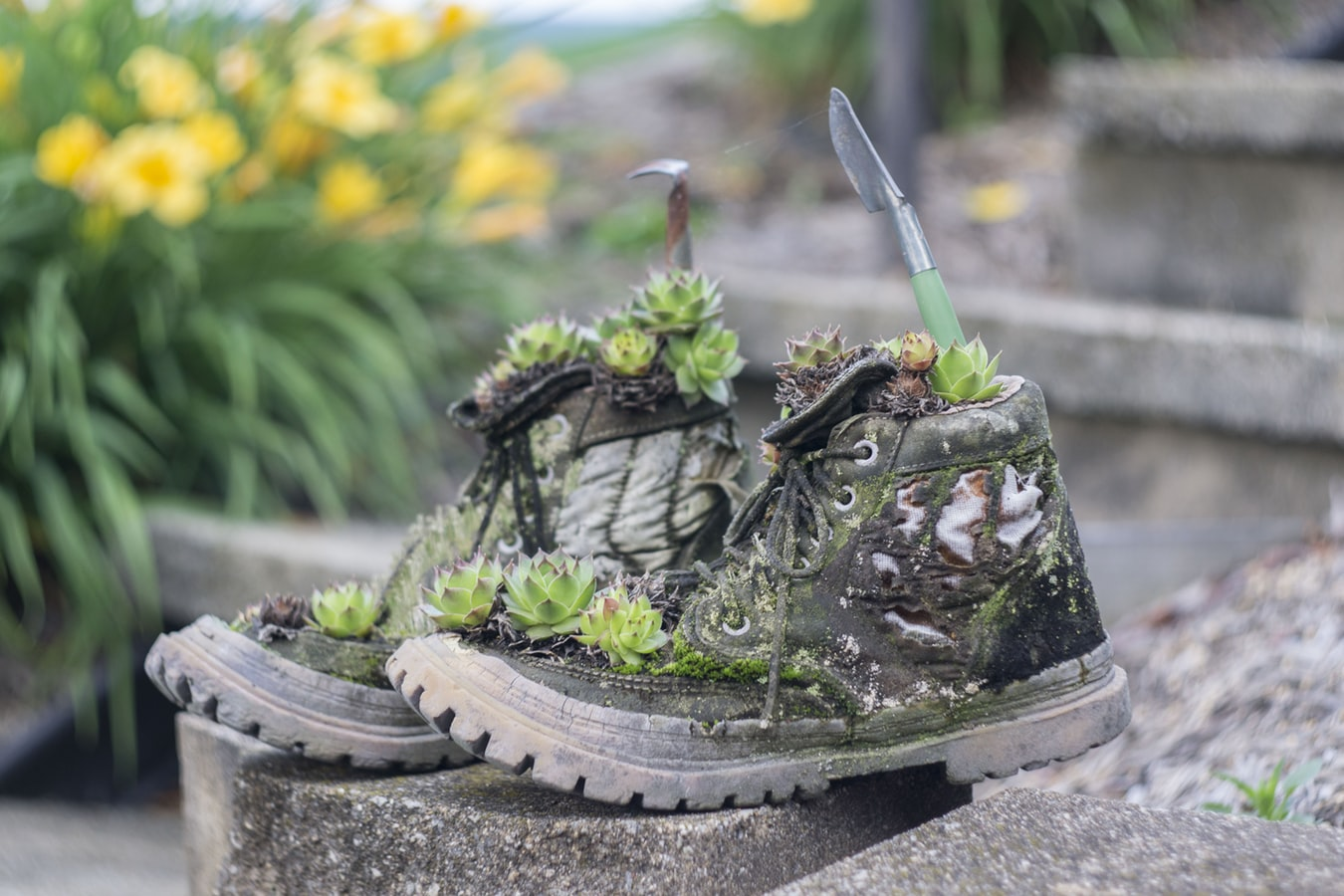 Boots with plants growing on them