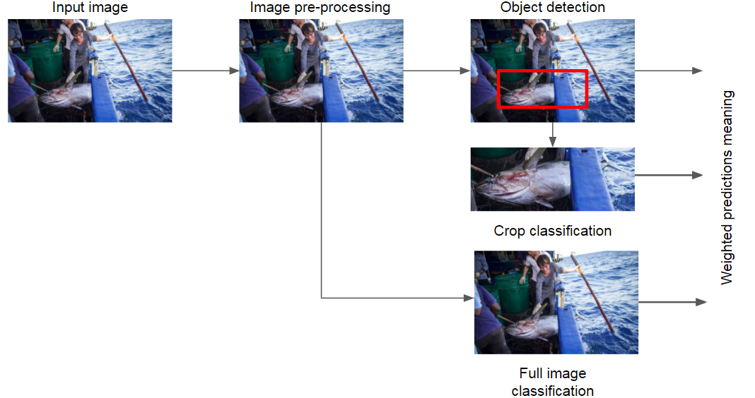 IThe algorithm for fish detection and classification
