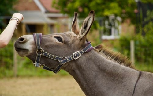 Working With Custom Policy in Mule 4
