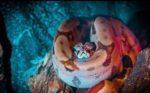 Anaconda Python Tutorial: Everything You Need to Know